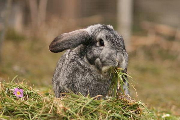 Kaninchen-Ernährung: Infoseite zur gesunden Kaninchenfütterung
