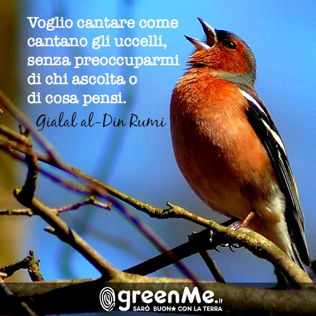 voglio cantare come cantano gli ucelli, senza preoccuparsi di chi ascolata e di cosa pensi. Gialal al-Din Rumi http://www.greenme.it/