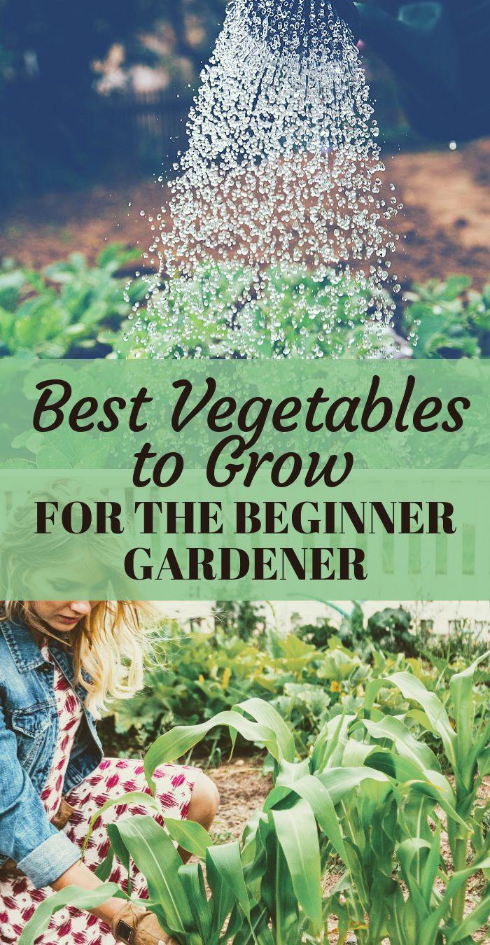 Best Vegetables to Grow For Beginner Gardeners