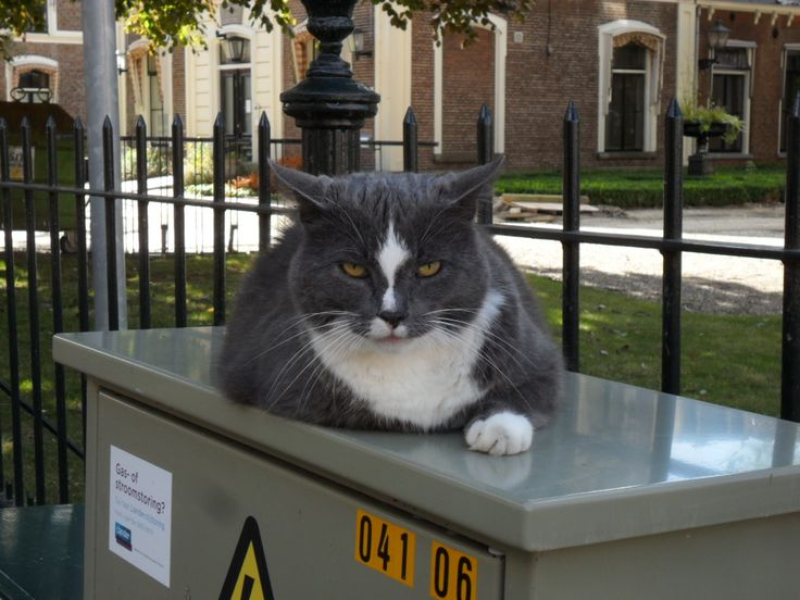Cat, near Anthony gasthuis, august 2016.