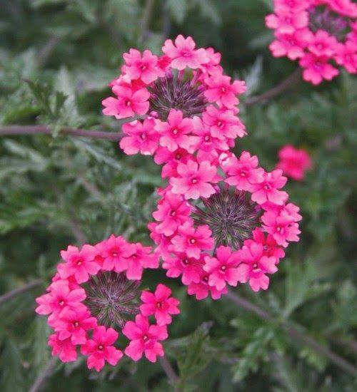 más de 25 ideas increíbles sobre jardines perennes en pinterest