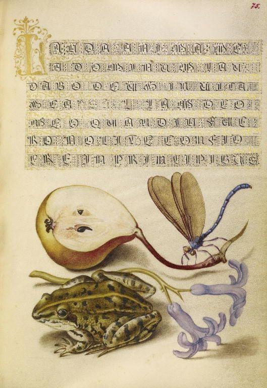 Joris Hoefnagel (illuminator)  [Flemish / Hungarian, 1542 - 1600], and Georg Bocskay (scribe)  [Hungarian, died 1575],                              Pear, Lake Demoiselle, Moor Frog, and Hyacinth,                              Flemish and Hungarian, 1561 - 1562