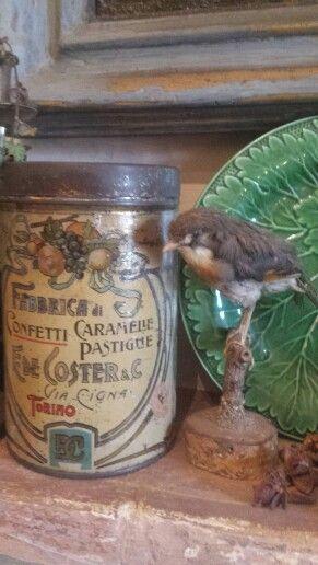 Oiseau Frou-Frou
