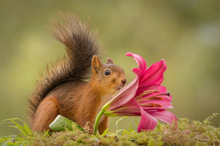 Flower directed by Geert Weggen on 500px