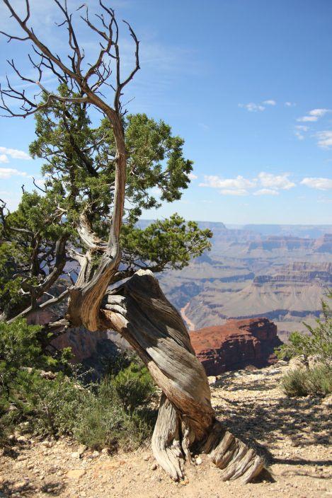 Widok z południowej krawędzi Wielkiego Kanionu  Wielki Kanion (Grand Canyon), Arizona, USA