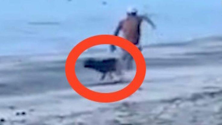 VIDEO: Mann tritt nach Hund und erlebt sein blaues Wunder! Instant Karma!  Ein wütender Tierquäler will anscheinend vor seinen Freunden angeben. Grundlos versucht er einen bis dahin harmlosen Vierbeiner mit dem Fuß zu erwischen. Selber Schuld, was ihm dann passiert! Video: Mann tritt nach Hund und erlebt sein blaues Wunder - Jetzt klicken! >>> https://www.film.tv/go/39597-pi  #Hund #Karma #Video