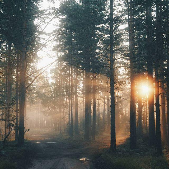Inspirational Quotes On Pinterest: 25+ Unique Forest Light Ideas On Pinterest