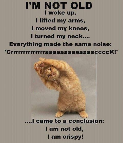 The-Crispy-Cat-Not-Old-One - Cute Funny Animal Pictures Cats Dogs COM