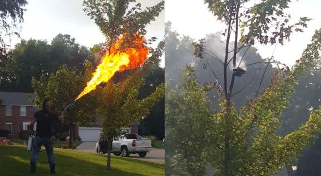 L'idée con du jour : Utiliser un lance-flamme pour éradiquer un nid de frelons