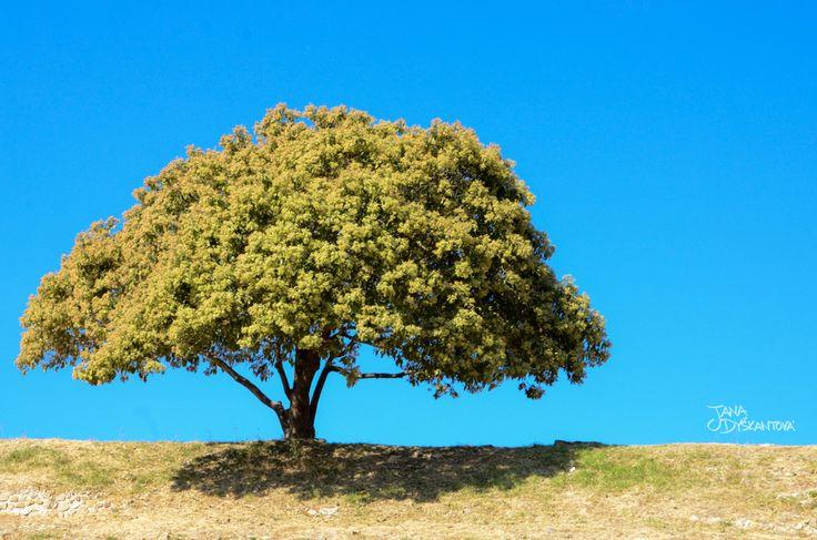 Mexico, Monte Albán - the tree of life  http://janadyskantova.cz/gallery/central-america/