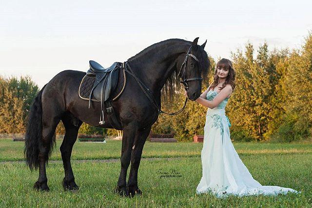 Instagram media by poetsphoto - Конь предоставлен - @fairytale.horse  #poetsphoto #friesian #frieser #frison #friesianhorse #friesiansofinstagram #friese  #horselove #lovehorses #horse #black #blackbeauty #bestofequines #drafthorse #horsesofinstagram #instahorse #stallion #equine #equestriansofinstagram #fairytale #girls #fairytalehorse #жеребец #конь #вороной #черный #фриз #бумер