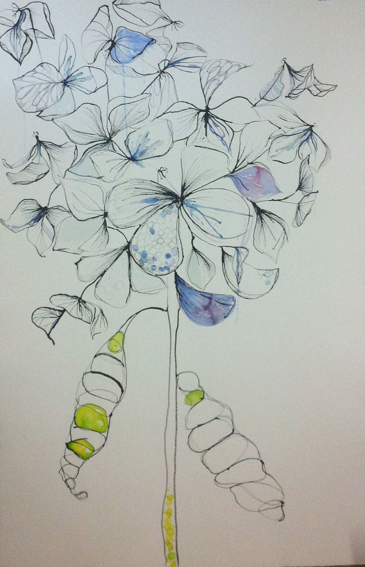 Hydrangeas by Fiona Chandler | PLATFORMstore