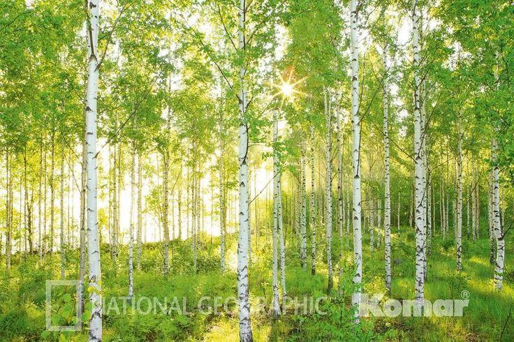 Selbstklebende Tapete Baumarkt : ?ber 1.000 Ideen zu ?Wald Tapete auf Pinterest Wandbilder