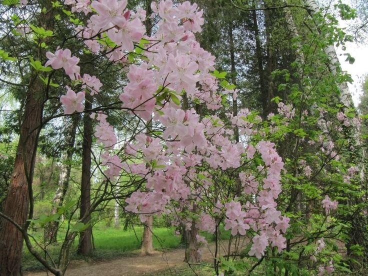 Kámoni Arborétum, Szombathely http://kozelestavol.cafeblog.hu/2014/05/12/kamoni-arboretum-szombathely/