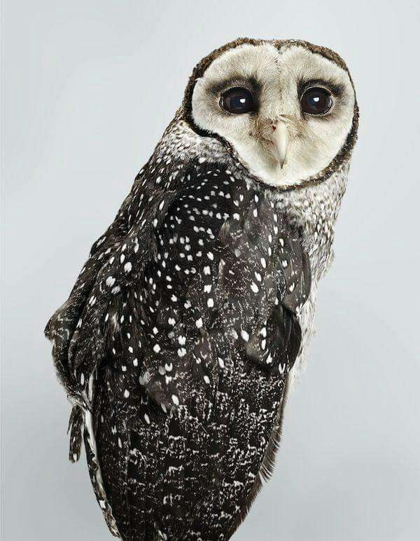 Mr Owl just cooling out...