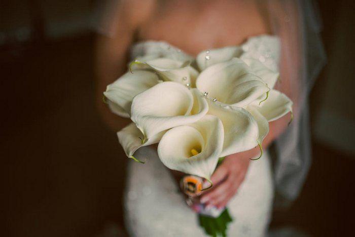 Calla  Presenta eleganti fiori tubolari, ottima per moderne boutonnieres e composizioni contemporanee. Possono essere collocate all'interno di bocce o cubi di vetro per creare sorprendenti centrotavola