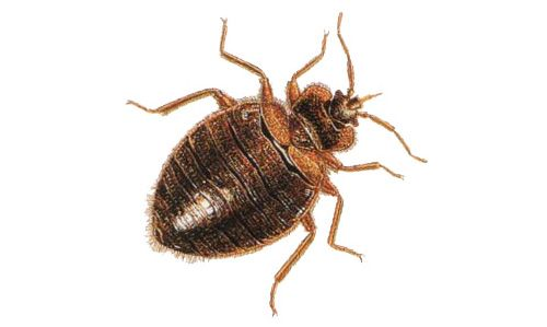 Tahta Kurusu İlaçlama Antalya | Antalya Böcek İlaçlama - Zirve Haşere İlaçlama