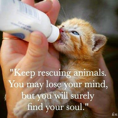 Keep rescuing animals . . .                                                                                                                                                                                 More