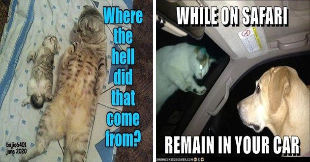 32 Cat Memes To Ensure You Have A Fabulous Caturday Best Cat Memes Cat Memes Funny Cat Memes