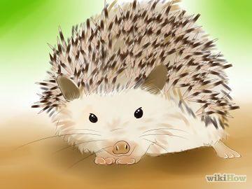 Buy a Hedgehog Step 1.jpg