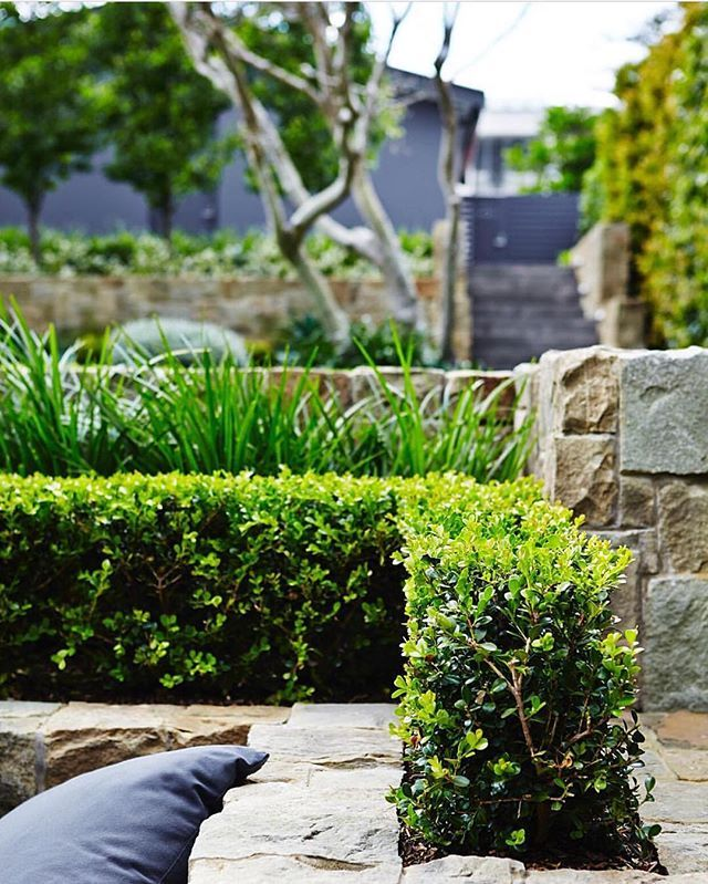 Cosy backyard via @outdoorestablishments #lnamember Plants supplied by corporate partner @exotic_nurseries   Creating functional purpose built green spaces to suit our Australian lifestyle #landscapecontractor #landscaping #landscapemaintenance #landscaper #gardens #outdoorliving  #gardendesign #construction #horticulture  #australiangardens #landscapearchitecture #landscapedesign #outdoorliving  #backyards #landscapeprofessional #areyouusingaprofessional #weekends #buxus