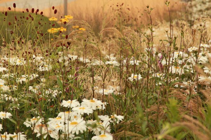 """De natuurlijk ogende tuin wint steeds meer terrein in De Lage landen. Internationaal heeft Nederland hier al vele jaren hoog aanzien in en wordt er gesproken over de """"Dutch Wave"""". De aanpak die onze landgenoot Piet Oudolf hierin hanteert wordt wereldwijd gezien als de nieuwe standaard en heeft van Piet Oudolf de meest invloedrijke tuinarchitect ter wereld gemaakt."""