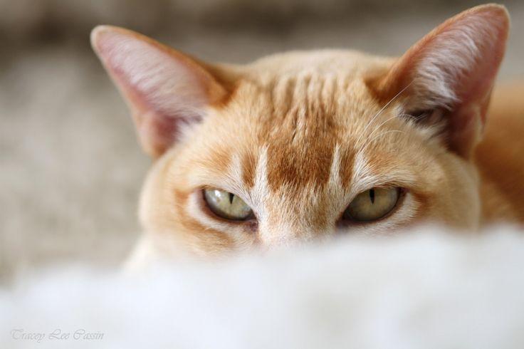 Tracey Lee Cassin Art & Photography: Cat Portrait... 'Do NOT Disturb'