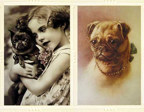 Vintage Pugs. Notice how there's a bit more space between the nose and forehead than in modern day Pugs. These aren't the earliest Pugs, though. #dog #pet