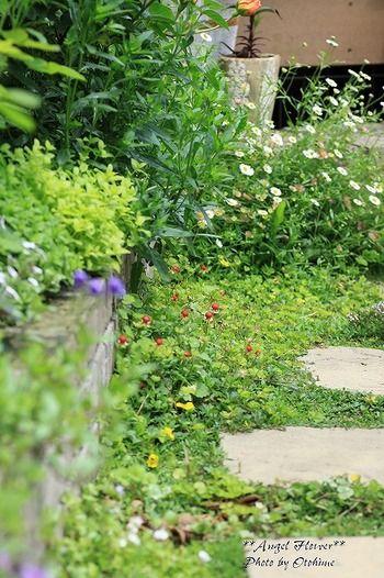 """ナチュラルガーデニングの""""ナチュラル""""という言葉には、「自然であること」「天然であること」「飾り気や誇張のないこと」という意味があります。 特別なことはやらずに、ありのままの植物の成長を活かした普段どおりのお庭づくり。それが『ナチュラルガーデン』という庭づくりのスタイルです。"""