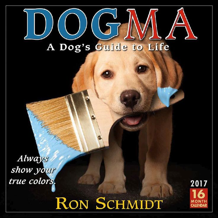 Nationally recognized photographer Ron Schmidt gives dog lovers a visual treat with his charming photos paired with what can only be described as doggone brilliant maxims.