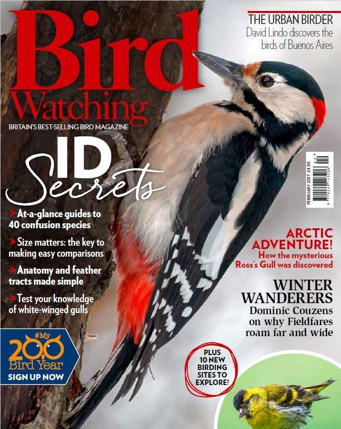 Welcome to the latest issue of Bird Watching, the UK's best-selling magazine for birdwatchers. To help anyone who's taking part in our #My200BirdYear challenge, this issue reveals how to separate the most common confusion species and increase your 2017 tick list. Plus, learn how to brush up on small bird identification, too. Elsewhere, we have some great articles on the Siskin and Fieldfare and detail how a historic voyage gave the lovely Ross's Gull seabird its name. You can also put