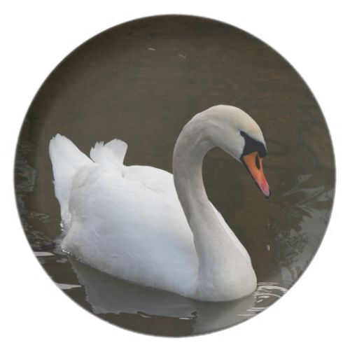 This beautiful Swan swimming on a Lake Nature Picture has been produced using an original photograph.Whether you display this plate, eat off it or both I am sure you will love it, #wedding #new #home #gifts #presents #wedding #gift #ideas #new #home #gift #ideas #kitchenware #home #decor #kitchen #dining #swan #lake #nature #picture #photographic #art #plates #display #plate #kitchen #decor #kitchen #art #cute #birds #accessories