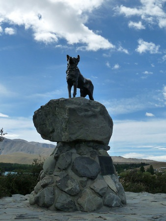 Lake Tekapo. Statue of a Border Collie. This is to commemorate the part the Border Collie played in sheep mustering in the pioneering days of the McKenzie district.