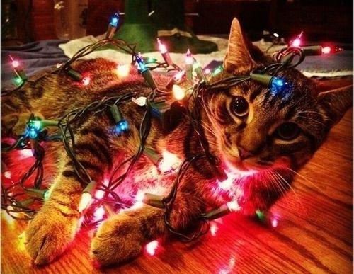 Resultado de imagen para cat christmas lights