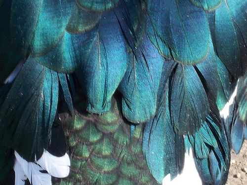 Feathers, textures