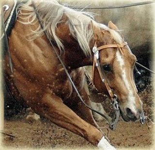 Cutting Horses | Cheval de Rêve Cutting Horses Learn about #HorseHealth #HorseColic www.loveyour.horse