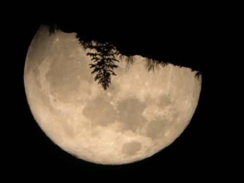 Huge Moon: Natural Intend, Natural Beautiful, Pretty Natural, Jellyfish