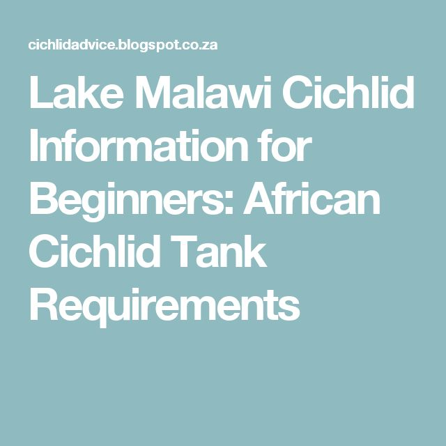 Lake Malawi Cichlid Information for Beginners: African Cichlid Tank Requirements