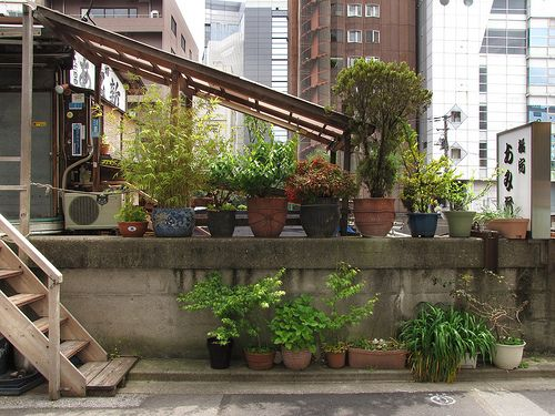I am so captivated and inspired by the flickr photostream of TsuyaTsuya Nemury. The stream is filled with images are of Tokyo's potted gardens. In a city where houses are small and gardens even sm...