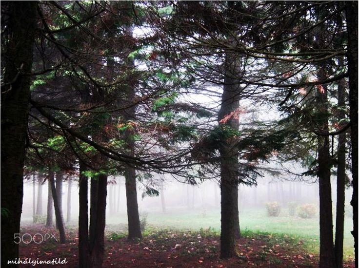 hidden in the fog - null