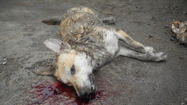 punishment for cruelty to animals !!!!