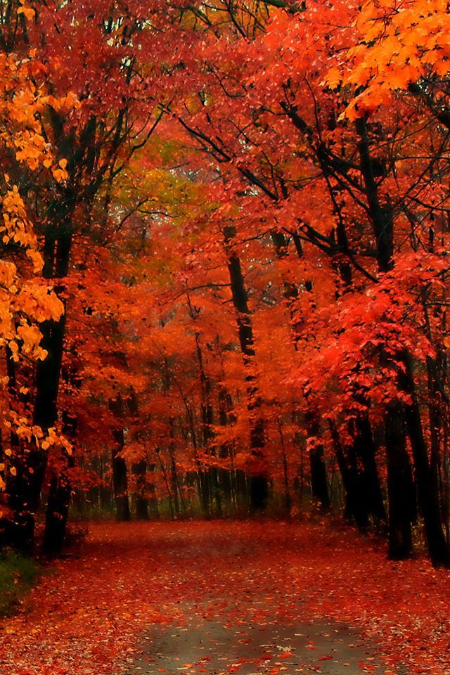Red Autumn Wallpaper Autumn Fall Nature Iphone Wallpaper