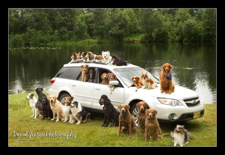 Best Subaru Outback Year >> 17 Best images about Dog Lovers on Pinterest   Shelter ...