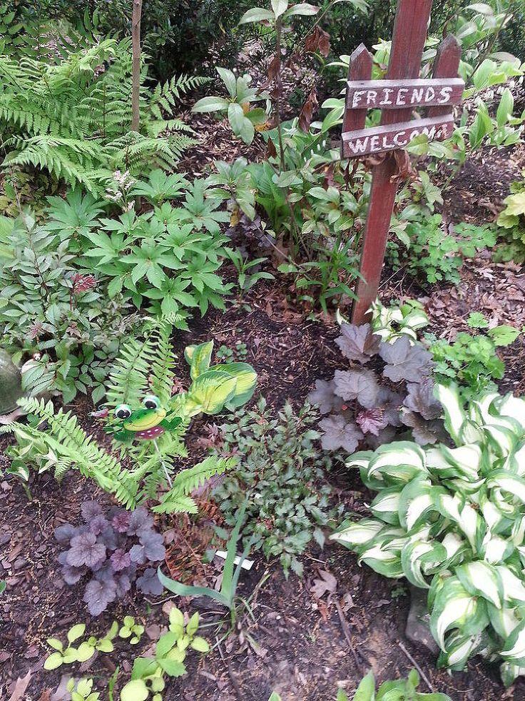 Hometalk :: Dividing Japanese Ferns (Athyrium Niponicum Var Pictum)