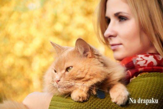 Jak przyzwyczaić kota do brania na ręce?