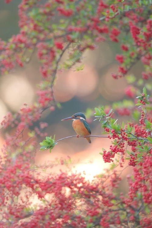 a kingfisher&prum