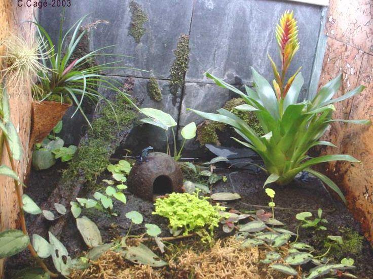 Partager Tweeter + 1 E-mail        JARdin Miniature en vase clos,  vivant dans un micro-climat humide, à l'abri de la poussière, le terrarium convient aux plantes demandant de l'humidité et notamment aux plantes d'origine exotiques. Très décoratif, il est assez facile à réaliser et nécessite peu d'entretien. Au moment de l'acaht des plantes, il est bon d'avoir le récipient avec soi, de manière à ne pas prendre de sujets trop grands. Demander conseil au vendeur,...