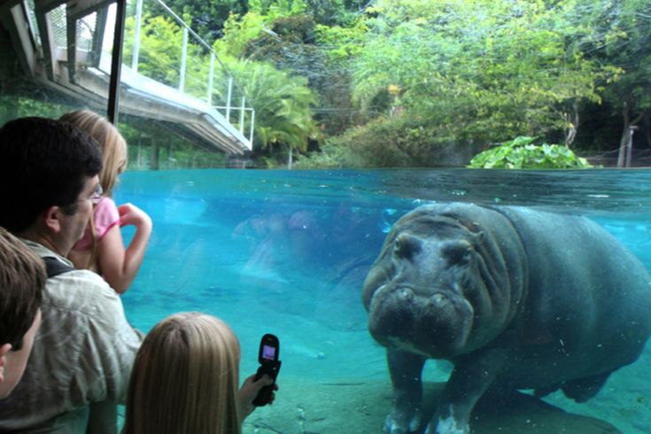Top 10 Best Zoos in the United States