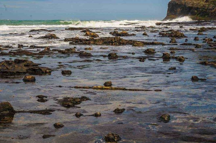 Fossil tree stumps and fallen logs are scattered over the shore platform at Curio Bay fossil forest in New Zealand