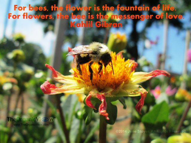 Bee Quotes: 17 Best Images About Garden Quotes On Pinterest